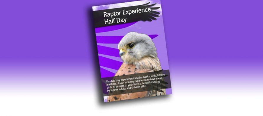 Raptor Experience Half Day