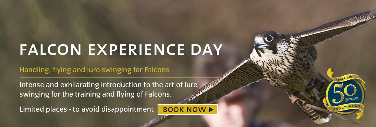 Falcon-experience-day