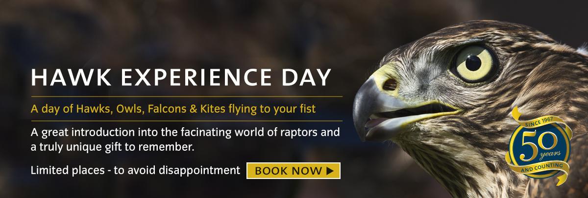 Hawk-full-day