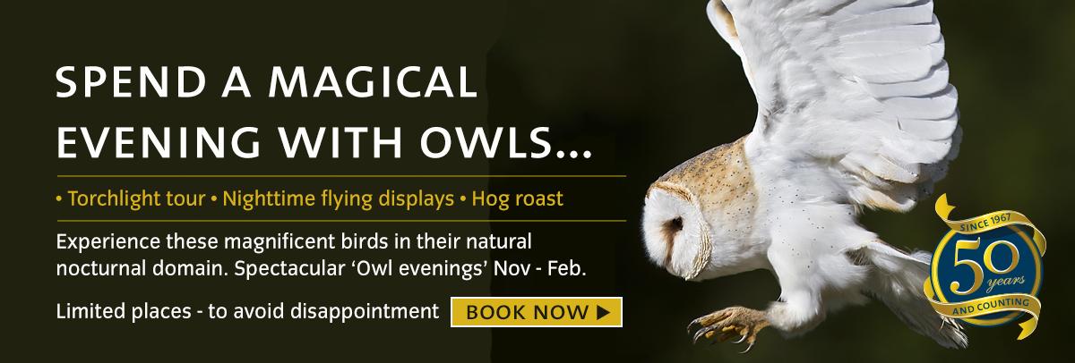 owl-evening-slide