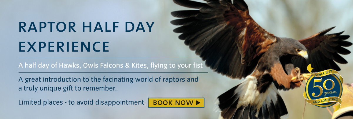 raptor-half-day