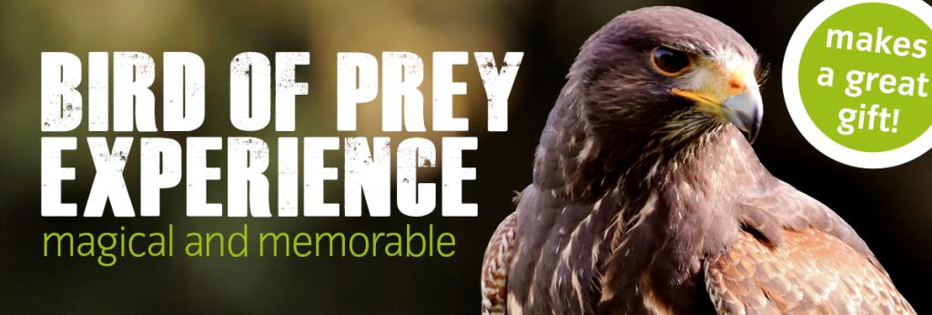 Bird Of Prey Experience Icbp